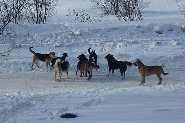 Регистрация домашних животных: собаки и кошки без жетона будут отстреливаться