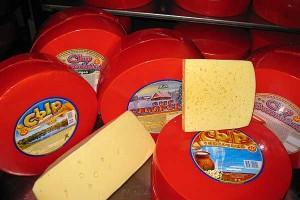 Из первых уст: то оно или не то — качество толочинских сыров