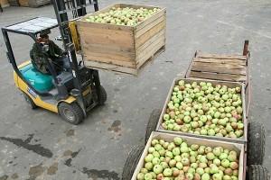 Хотите заработать на яблоках? Поторопитесь