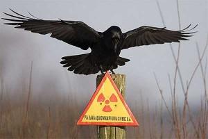 День чернобыльской трагедии: осторожность будет не лишней