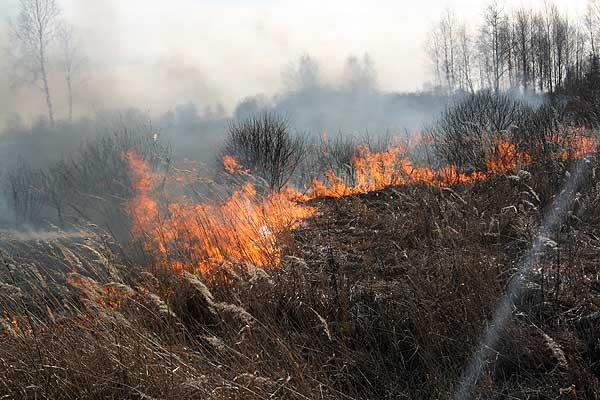 Ни втолковать, ни убедить: огонь снова уничтожил бесценные природные богатства