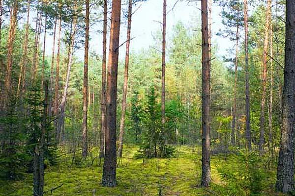 Внесите вклад в приумножение лесов
