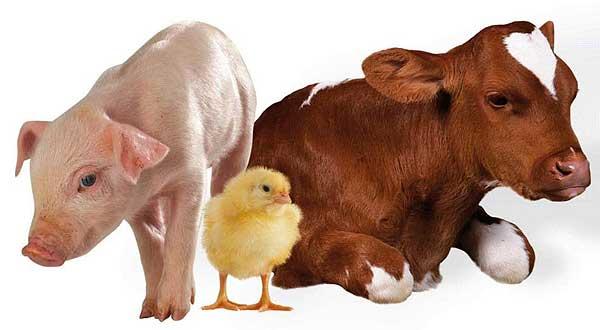Изменения в страховании животных вызваны уменьшением поголовья в домашних хозяйствах населения