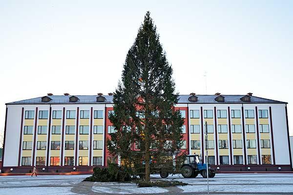 Главная елка Толочина занимает свое место на площади города