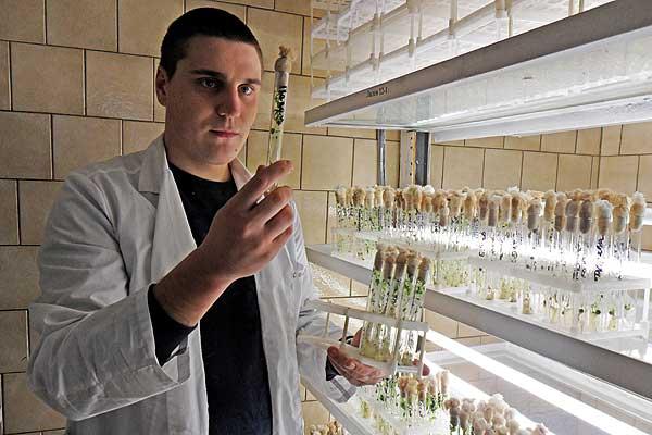 Свой вклад в получение элитных и суперэлитных сортов картофеля вносит и толочинец Дмитрий Курпатов