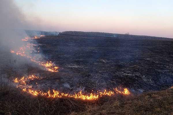Загорание сухой травы на полях едва не привело к лесным пожарам