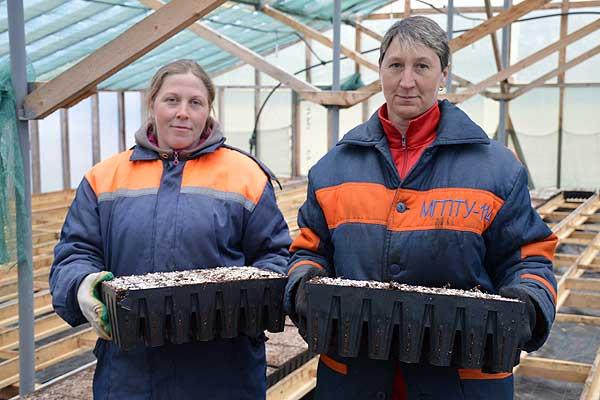 В Толочинском лесхозе выращивают ели в кассетах