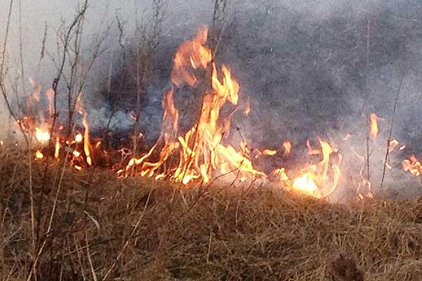 От выжигания сухой растительности страдает не только природа