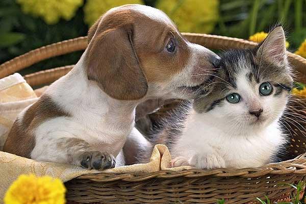 О содержании домашних животных