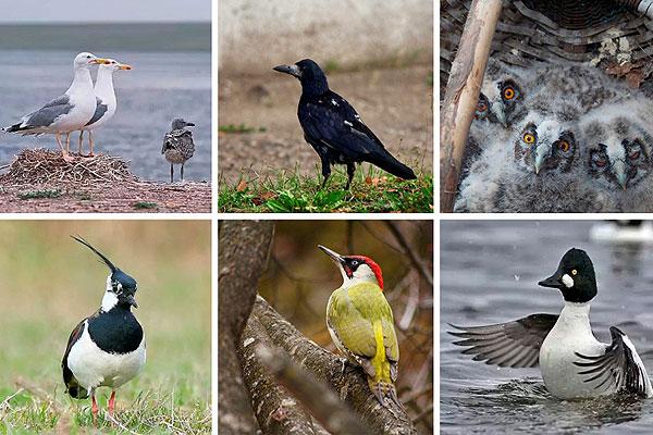В Толочине выберут птицу-символ района