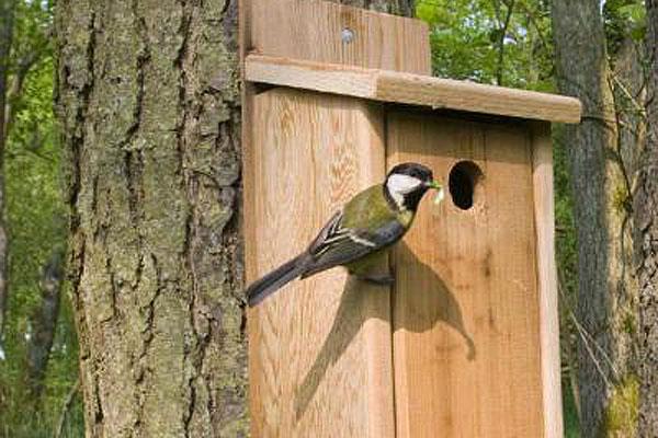 В лесных угодьях Толочинского района развешено 500 домиков для птиц