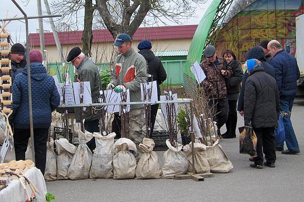 На ярмарке в Толочине спросом пользовались саженцы