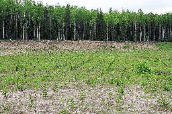 Толочинский лесхоз работает  на результат