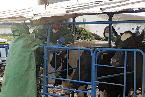 В Толочинском районе прошли учения по защите сельхозобъектов от радиоактивных осадков