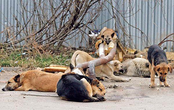 Избегайте бездомных животных: в Толочинском районе участились случаи заболевания детей микроспорией
