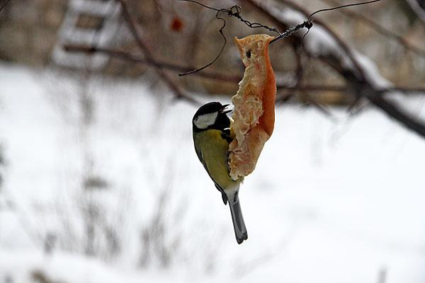 Уроки наблюдения за птицами