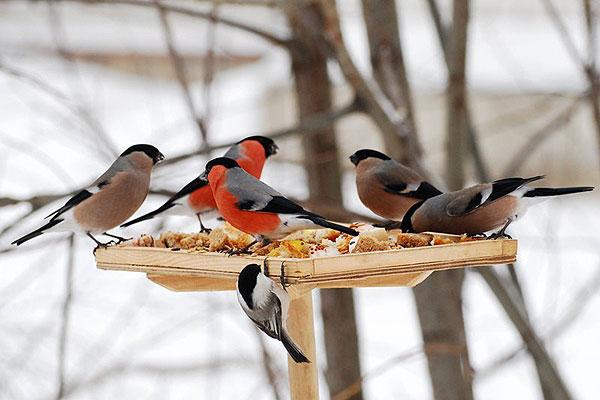 Банкет для птиц — радость для юннатов