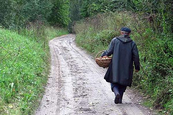 В Толочинском районе снят запрет на посещение лесов