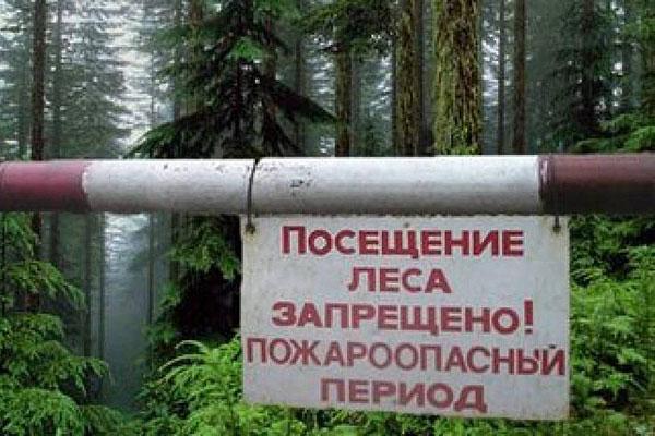В Толочинском районе введен запрет на посещение лесов и торфяников