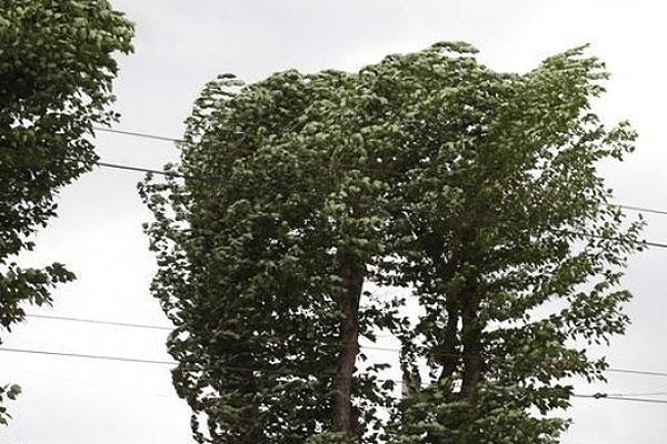 На территории Толочинского района ожидается усиление ветра