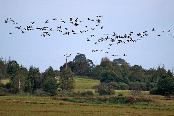 В Толочинском районе встречают орнитологическую осень