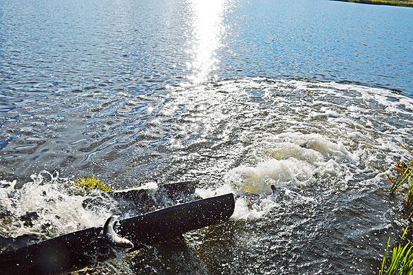 Воду Друти и Соколянки будут очищать белый амур и толстолобик