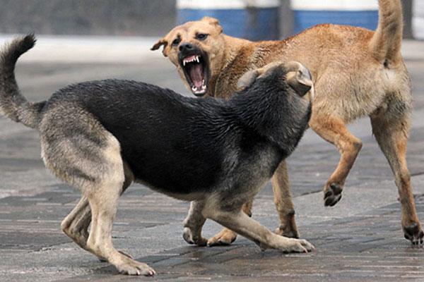 Для кого центр Толочина — для собак или для людей?