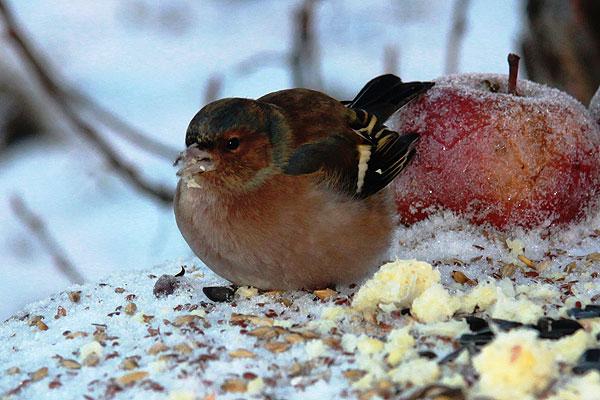 Окно в природу: кормушка — не игрушка, а средство изучения птиц