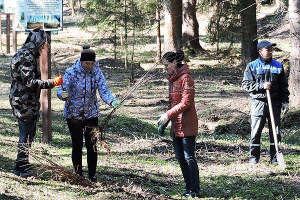 Ад Тыдня лесу — да Дня Зямлі: талачынцы навялі парадак і ажыццявілі пасадку дрэў на лясных тэрыторыях