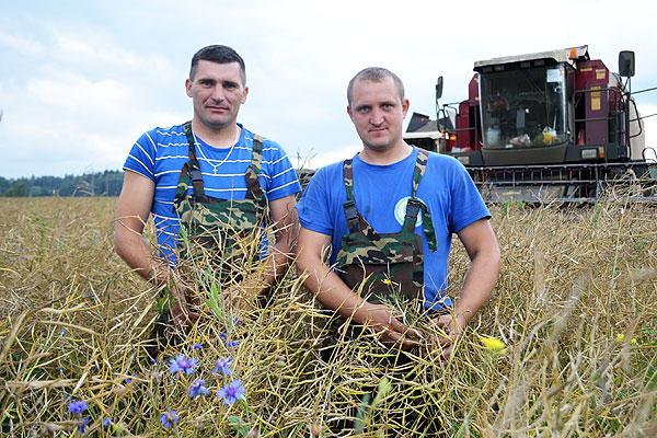 Урожайность рапса на Толочинском консервном заводе — выше прошлогодней