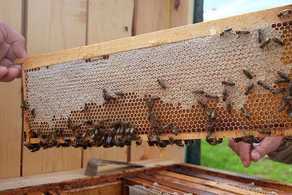 Продукция толочинского пчеловода Анатолия Куприянца на республиканских выставках не раз отмечалась как одна из лучших