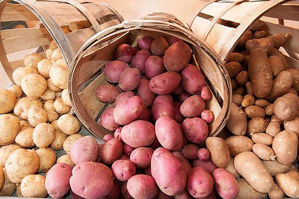 В Воронцевичах пройдет праздник картофеля