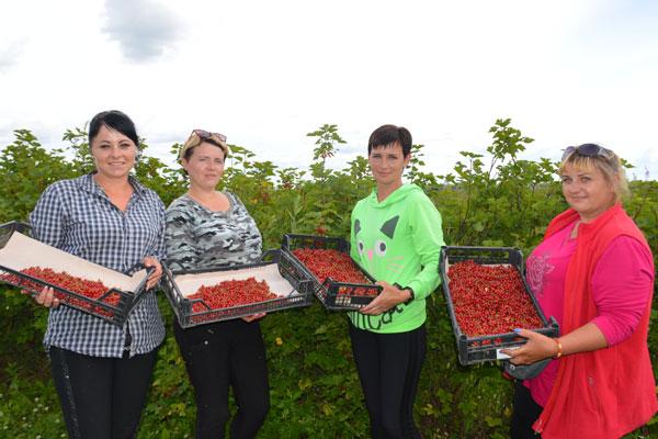 Сад Толочинского консервного завода — один из лучших в республике