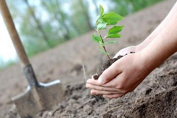 «Неделя леса-2021» пройдёт в Толочинском районе