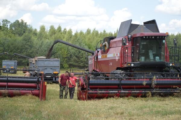 Фоторепортаж: На полях Толочинского консервного завода приступили к уборке рапса и пшеницы