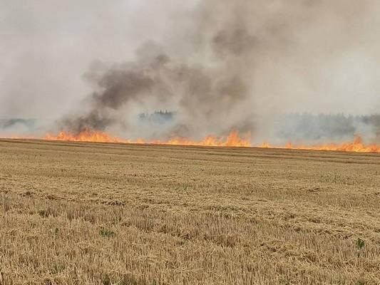 Спасатели потушили пожар на поле Толочинского консервного завода