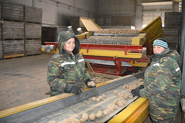 Консервный завод остаётся верен традиции лидерства в производстве картофеля